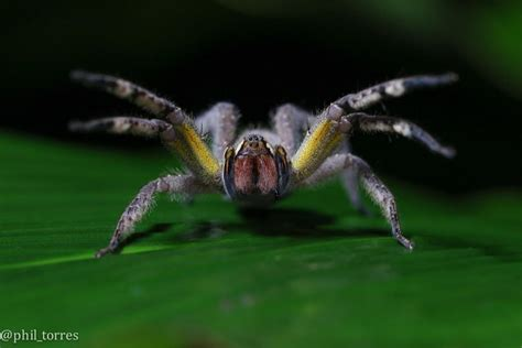 gmo spider venom may be the next wired