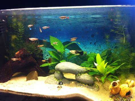 aquarium mon aquarium d eau douce de 60 l page 3