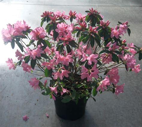 plantes fleuries d exterieur