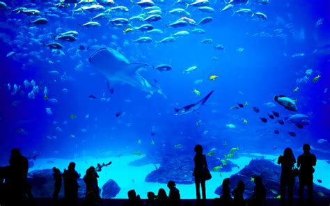 le grand aquarium destination malo