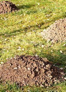 Garten Was Tun Im März : 355 best images about garten und pflanzen on pinterest manche urban gardening and top five ~ Markanthonyermac.com Haus und Dekorationen
