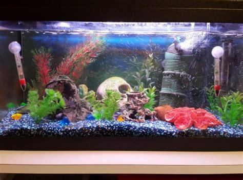 aquarium 54l avec tout le mat 233 riel et poissons animaux fribourg annoncis ch