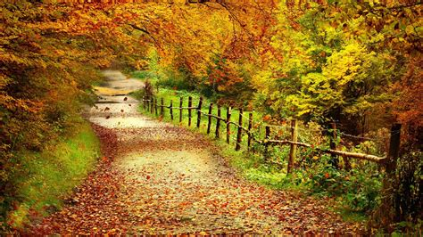 Autumn Love Wallpaper Landscape Backgrounds #1730 Kitchen Cabinets With Drawers That Roll Out Buying Small Storage How To Install A Cabinet Best Brand Components Glass Hardware Port Coquitlam