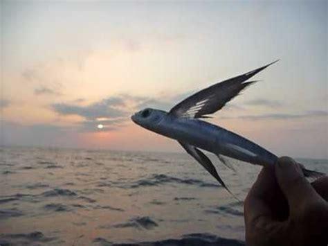 Flying Fish Boat Youtube by Sri Lanka ශ ර ල ක Skydiving Flying Fish Close Up 01