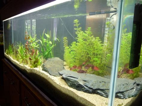 aquarium 500 litres images