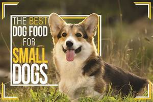 Best Dog Food for Small Dogs | Small Breed Dog Food