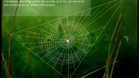 comment l araign 233 e construit sa toile espace des