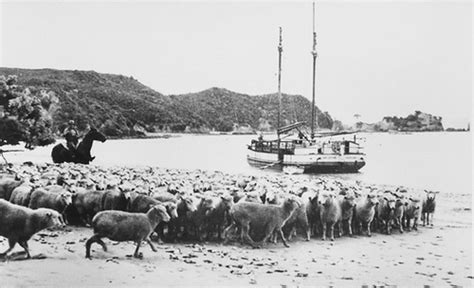 Scow Jane Gifford by The Scow Jane Gifford Moored Near Orere Point 1936