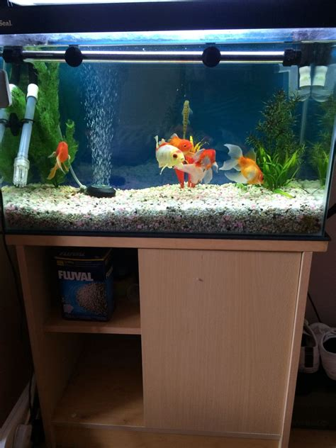fish tank for sale south east pets4homes