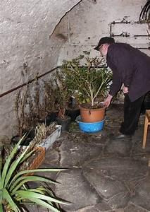 Immergrüne Winterharte Kübelpflanzen : preview ~ Markanthonyermac.com Haus und Dekorationen