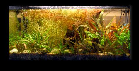 aquarium quot autonome quot