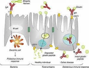 Functions of the Gastrointestinal System