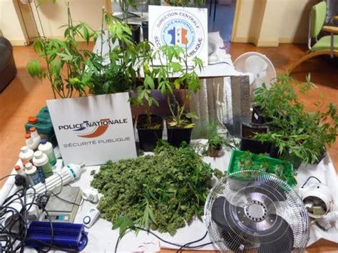 il cultivait des plants de cannabis dans sous sol pour sa consommation personnelle