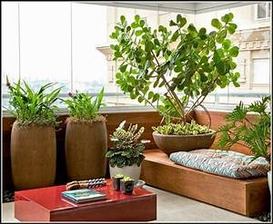 Welche Pflanzen Als Sichtschutz : sichtschutz mit pflanzen balkon balkon house und dekor galerie blagovdab7 ~ Markanthonyermac.com Haus und Dekorationen