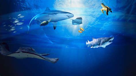 grand aquarium malo tarif 28 images tourisme et activit 233 s 224 malo et dans la r 233 gion