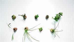 Pflanzen Bewässern Mit Plastikflasche : diy so leicht bastelt ihr korken pflanzen ~ Markanthonyermac.com Haus und Dekorationen