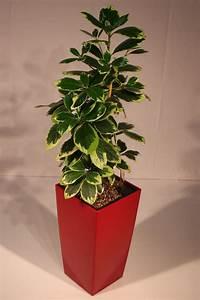 Pflanzen Bewässern Mit Plastikflasche : st ckli gartenbau frick g rten pflanzen und floristik leben mit pflanzen ~ Markanthonyermac.com Haus und Dekorationen