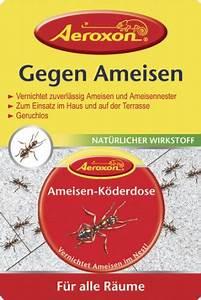 Hilft Mehl Gegen Ameisen : hilfe gegen ameisen in der wohnung hilft essigreiniger ~ Whattoseeinmadrid.com Haus und Dekorationen