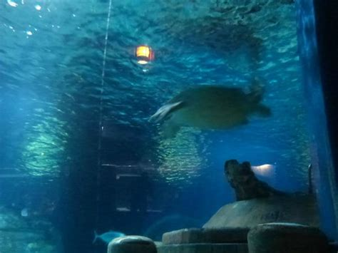 tortue picture of aquarium sea val d europe marne la vallee tripadvisor