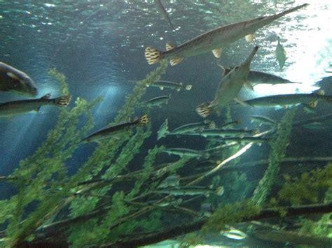 wordless wednesday sea minnesota aquarium sealifemnhorsing around in la