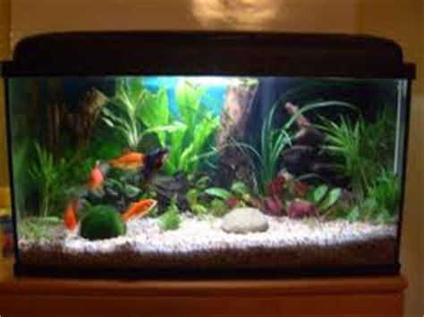installation id 233 e d 233 coration aquarium pour poisson