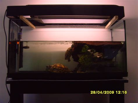 aquarium eau douce tortue