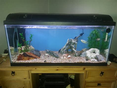 decorations big fish tanks for sale with exciting and