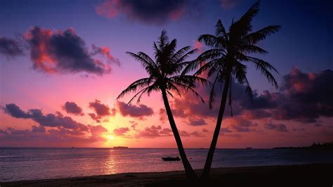 Tropical Pink And Purple Sunset