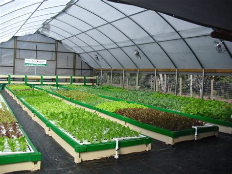 Fish Aquaponics For Your Information