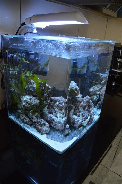 recifal que mettre dans un nano de 60 litres les poissons
