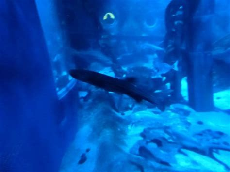 requin picture of aquarium sea val d europe marne la vallee tripadvisor