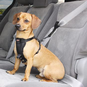 Dog Boat Seat by Experts Say To Buckle Your Pet In The Car All Pet News