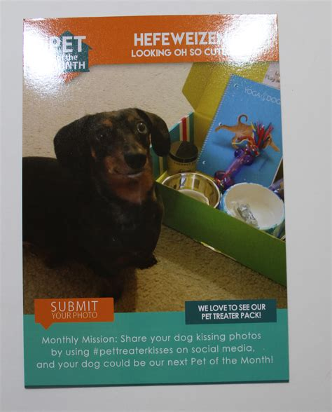 pet treater box review coupon march 2017 my