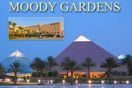 Moody Gardens In Galveston Tx Features A 10 Story