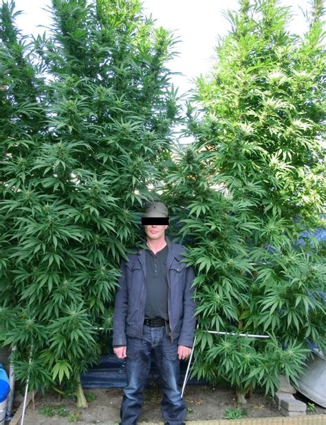 chambre culture cannabis images