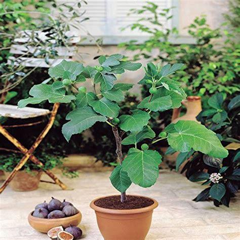Garten  Obst Produkte Von Meingartenshop Online Finden