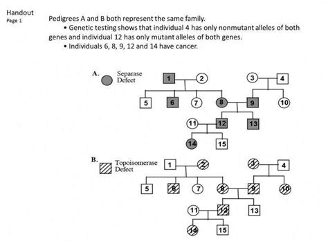 Pedigree Worksheet Homeschooldressagecom