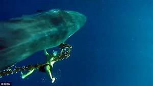 Video shows whale spotter free marine mammal from illegal ...
