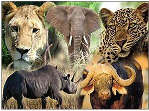 Best 5 Safaris