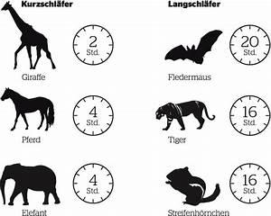 In Welche Himmelsrichtung Schlafen : schlafen wenn tiere tr umen beobachter ~ Markanthonyermac.com Haus und Dekorationen