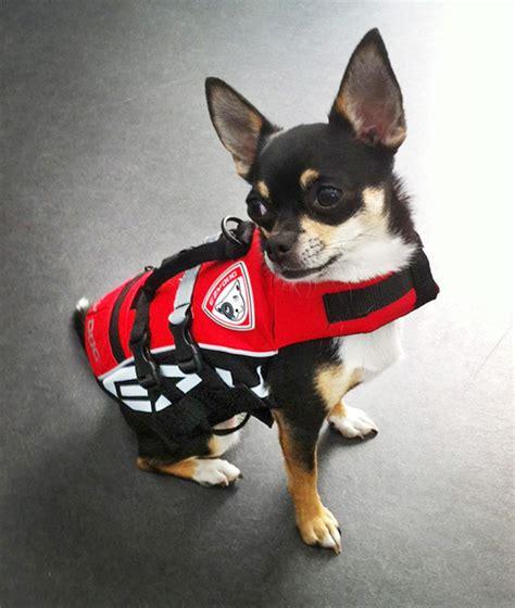 Zwemvest Voor Chihuahua by Ruff Wear Zwemvest Ervaringen Hondenforum