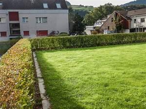 Sichtschutz Schnell Wachsend : her mit der hecke mueller gartens webseite ~ Markanthonyermac.com Haus und Dekorationen