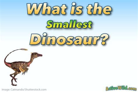 What Is The Smallest Dinosaur List Of Small Species With. Rental Lease Termination Letter Template. The Sample Of Cv Template. Sample Letter Of Interest For School Position Template. Puppy Paw Print Clip Art. Metric Ruler Actual Size. Job Description Template Word Templates Free Word Template. Program Covers For Church. Nutritionist Cover Letter