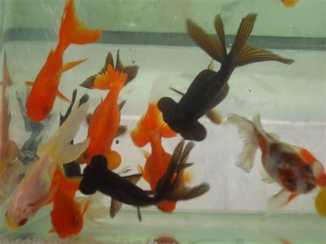 poissons quot eau froide quot