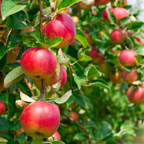 Fruit Nurseries In Kerala Thenurseries
