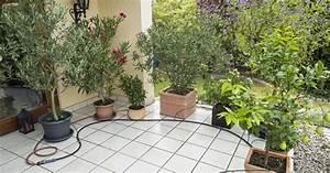 Tragehilfe Für Kübelpflanzen : tr pfchenbew sserung f r k belpflanzen installieren mein sch ner garten ~ Markanthonyermac.com Haus und Dekorationen