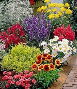 Bilder Günstig Kaufen : bunter staudengarten 9 pflanzen g nstig online kaufen mein sch ner garten shop ~ Markanthonyermac.com Haus und Dekorationen