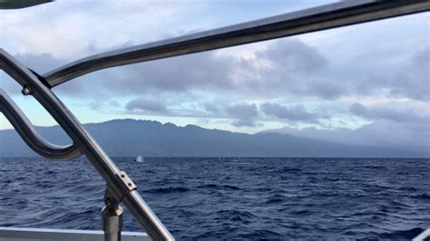 Boat From Maui To Honolulu by Night Passage From Oahu To Maui Sailing S V Bella Marina