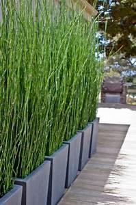 Bambus Dielen Terrasse : bambus als sichtschutz im garten oder auf dem balkon ideen outdoor garten pinterest ~ Markanthonyermac.com Haus und Dekorationen