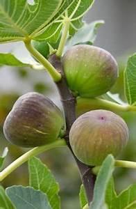 Pfeffer Pflanze Selber Züchten : die 25 besten ideen zu pflanzen auf pinterest pflanze sukkulenten und sukkulentengarten ~ Markanthonyermac.com Haus und Dekorationen